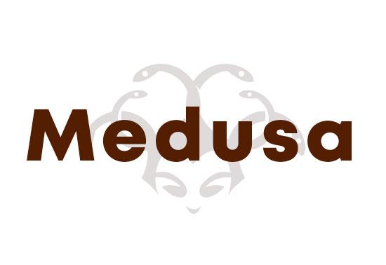 Medusa Parallel Network Login Auditor